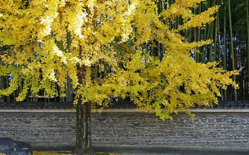 今宮神社 黄葉と紅葉と