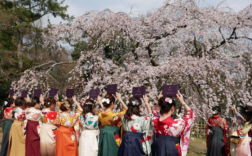 京都御苑 近衛邸跡の枝垂れ桜は・・・