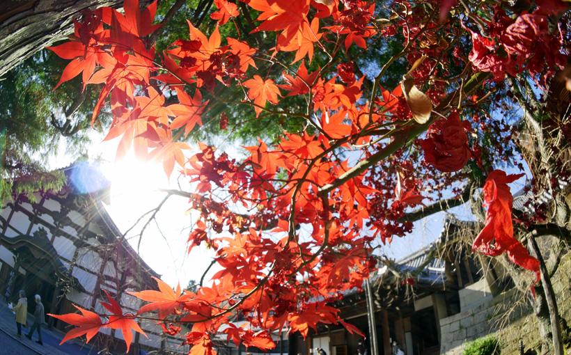 京都・西山 光明寺をfish-eyeで撮る