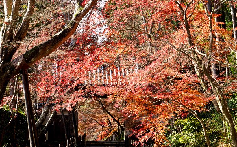 京都・西山 光明寺の枯れ紅葉 2020