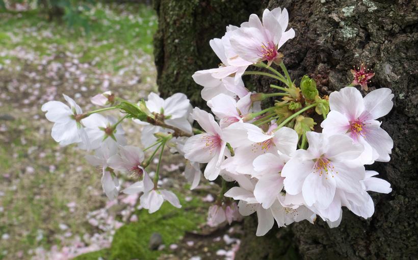 花開く春 カメラ片手に近くを散歩