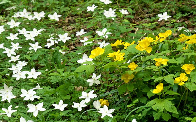 ポンポン山 竃ケ谷の黄色い花と白い花