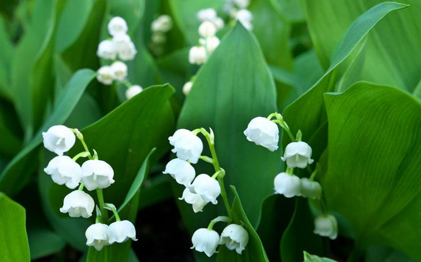 五月の花々 カメラ片手に近所を散歩